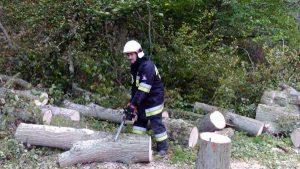Usuwanie drzewa . Domacyno październik 2016r
