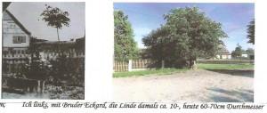 Porównanie lipy - wcześniej iteraz. Domacyno/ Dumzin (Obok Państwa Grzankowskich)
