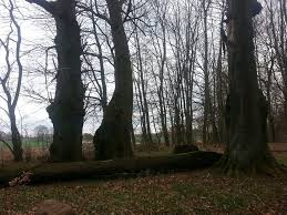 Park Domacyno 2014