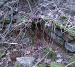 Ruiny kaplicy cmentarnej Domacyno 1