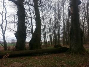Park przypałacowy Domacyno kwiecień 2014r.